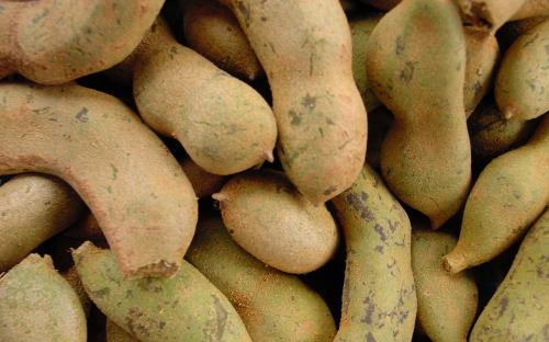 Picture of: Tamarind (imli)