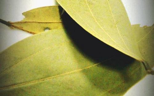 Picture of: Bay Leaf (Tej patta)- Secret indian Recipe