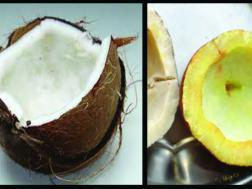 Picture of: Coconut (Wet & Dry)